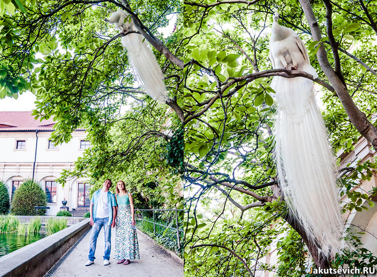 Утро в Праге - белый павлин в парке на метро Mалостранская - фотограф в Чехии Артур Якуцевич
