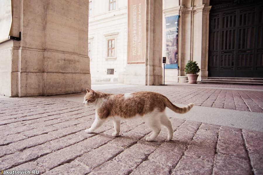 Коты в Риме - фото Артура Якуцевича