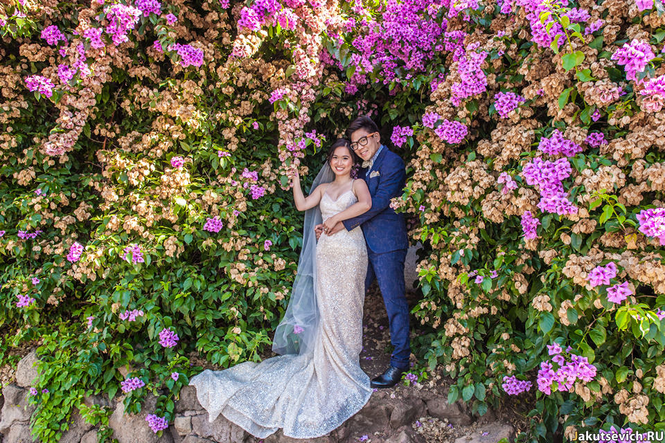 Розовые кусты цветом в Риме