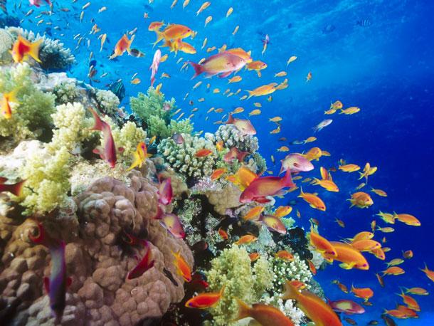 съемка фото под водой