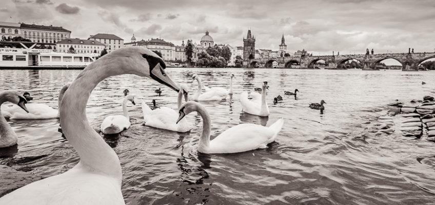 свадьба-в-Праге-для-израильтян-029