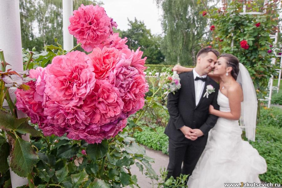 Сад роз в Праге
